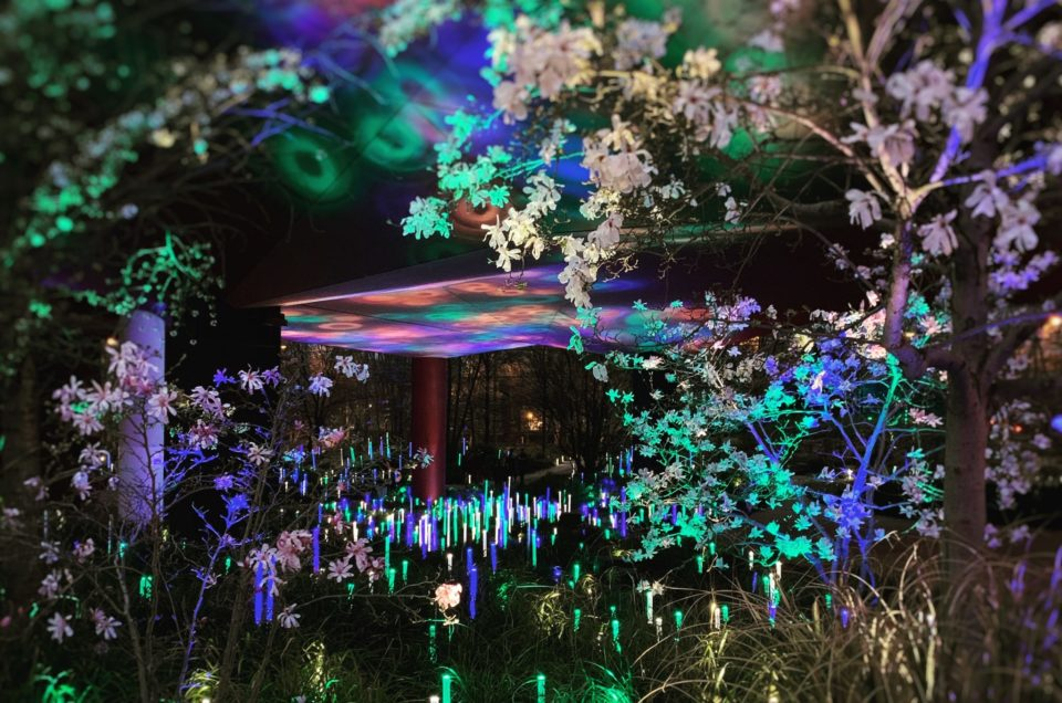 Magique traversée des jardins illuminés du Musée du quai Branly