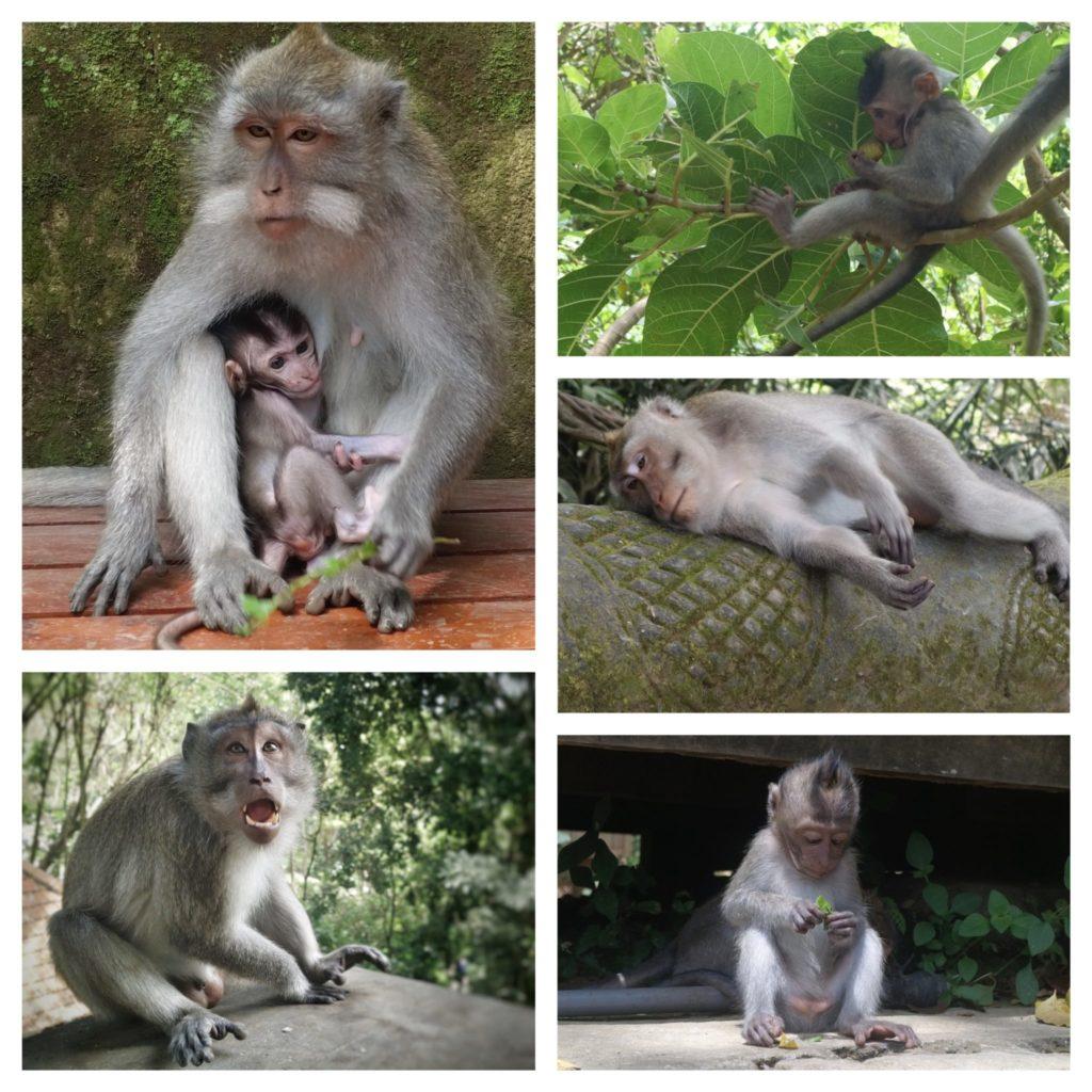 singes dans toutes les positions, maman et bébé