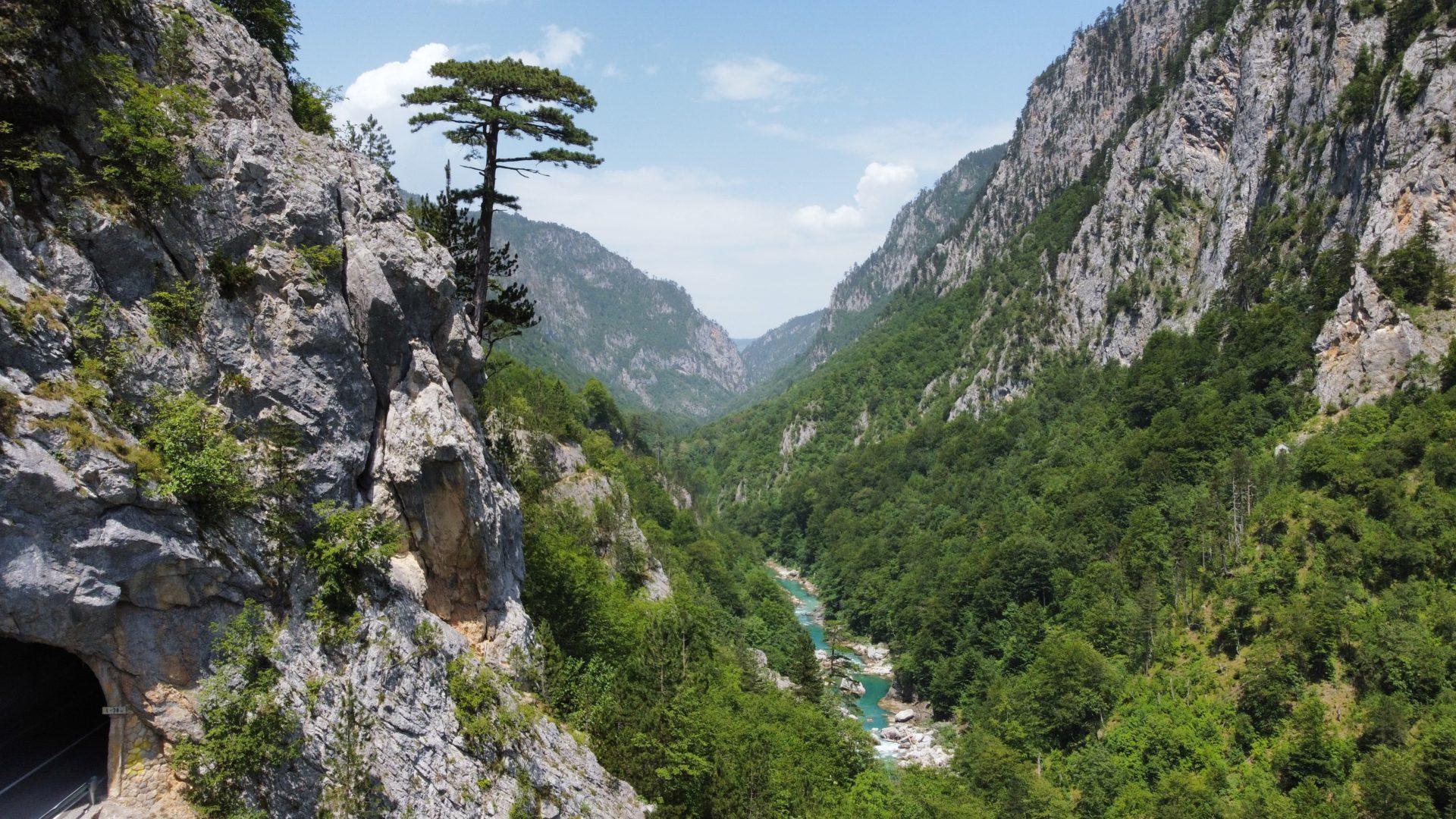 Canyon de Tara avec un très bel arbre photographié en juillet 2021 avec un Drone DJI Mini2