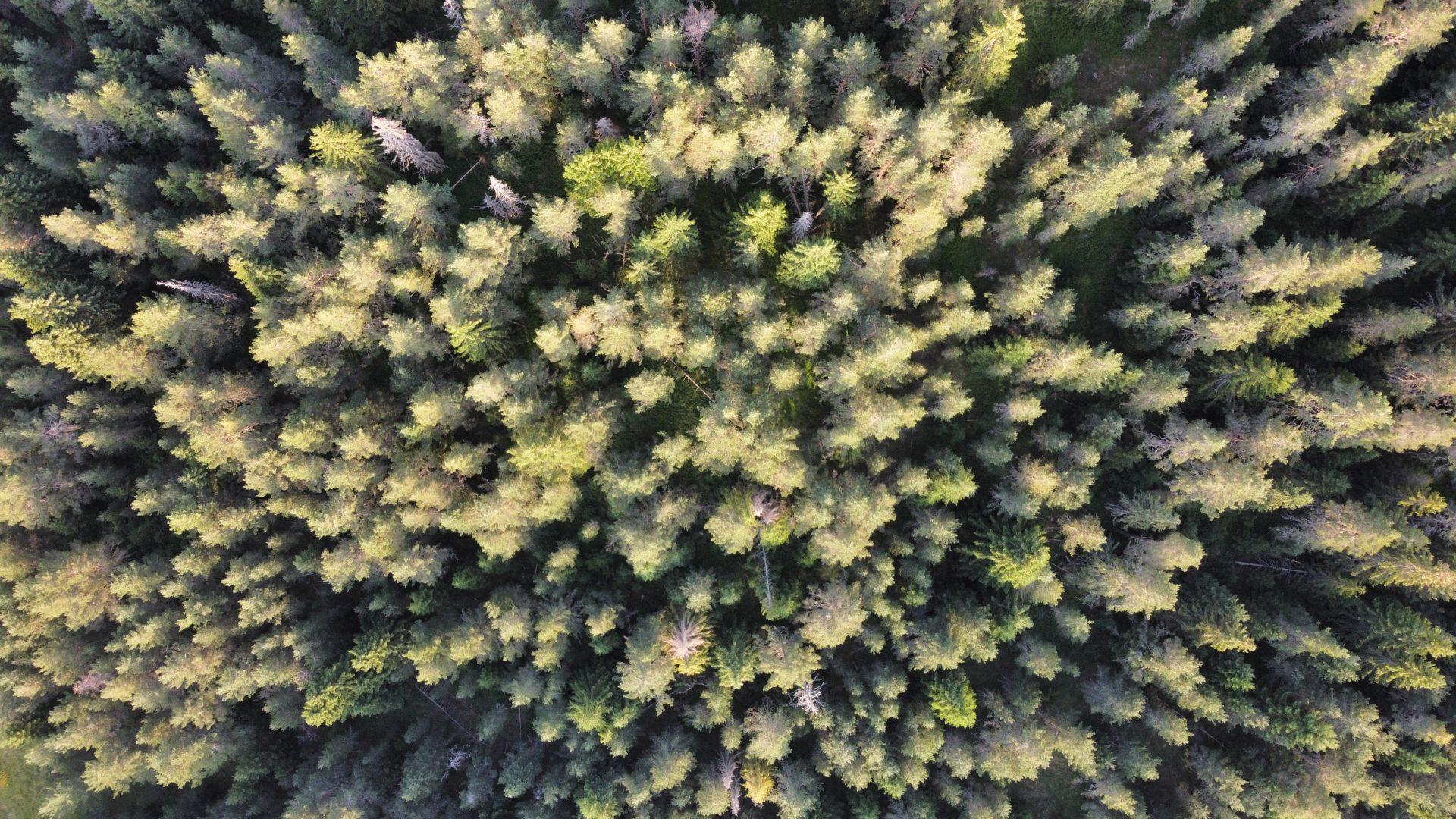Photo drone Monténégro : Cime des arbres vue du ciel, très géométrique photographié en juillet 2021 avec un Drone DJI Mini2
